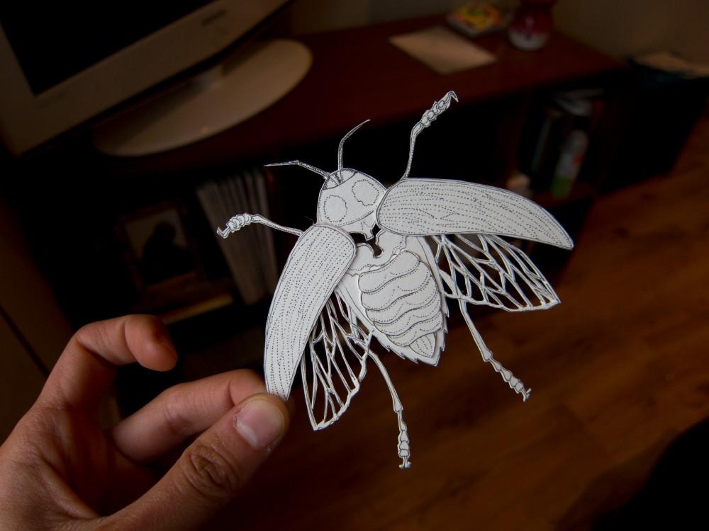 2 Large Beetle
