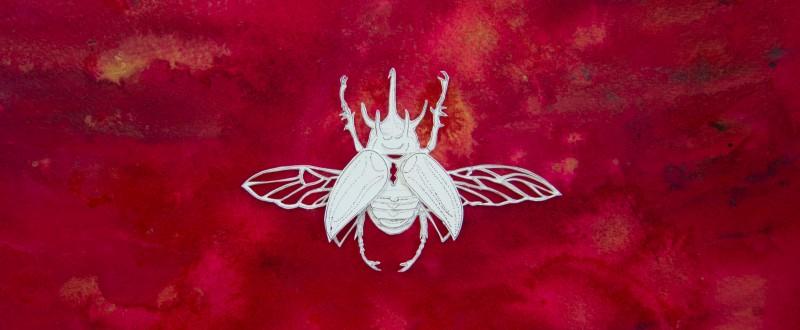 26 Beetles on Red Bg Beetle 2 Crop